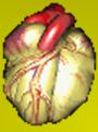 jantung_kita